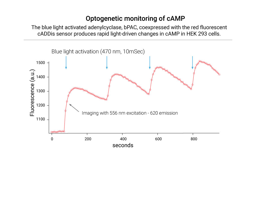 optogenetic-monitoring-of-cAMP